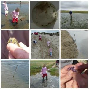 Excursie Slufter Texel Ecomare Familie programma kinderen dagje uit