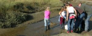 Familieprogramma De Slufter Texel Ecomare Excursie