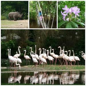Burgers Zoo dagje uit erop uit arnhem gelderland dierentuin dierenpark