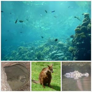 Burgers Zoo dierentuin dierenpark dagje uit erop uit gelderland arnhem