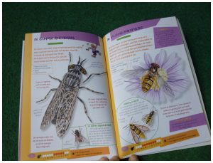 De leukste insectengids voor kids Antoine Brin Lionel Valladares natuur kinderen beestjes informatieboekje natuur avontuur recensie review