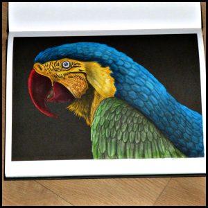 Ingenieuze inkt Tim Jeffs hobby kleuren kleurplaten kleurboek BBNC grijstinten grey-scale zwarte achtergrond enkelzijdig bedrukt detail schaduwen kwaliteitspapier recensie review
