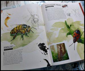 Insecten onder de loep Francois Lassere natuur Clavis kinderen dieren steken prikken vliners bijen rupsen torren mieren verrassend details tekeningen wezentjes recensie review