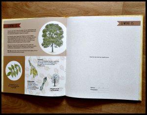 Mijn mooiste bladeren verzamelboek Dirkk Criel natuur Deltas bos bomen informatie bladvormen schors bladeren seizoen groeien droogpers drogen natuur speels plakken DIY bloemen lente zomer herfst bladpers recensie review