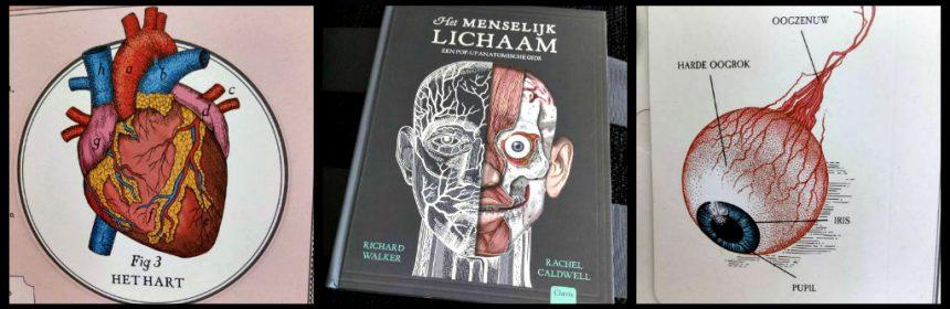 Het menselijke lichaam (pop-up) Richard Walker Clavis natuur & wetenschap informatief educatief anatomisch model tekeningen 3D flapjes ribbenkast gezicht constructie kwetsbaar lugubere uitstraling recensie review