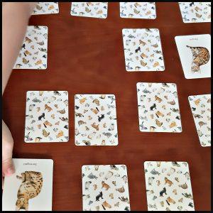 Katten & Kittens Memoryspel kaartspel BIS Publishers illustraties tekeningen spel memoryspel memoriespel memospel doosje kaartjes kennis kleur onthouden moederpoes lezen kattenillustaties achterkant vrolijk spel leren kattengids informatie ras karakter vacht recensie review